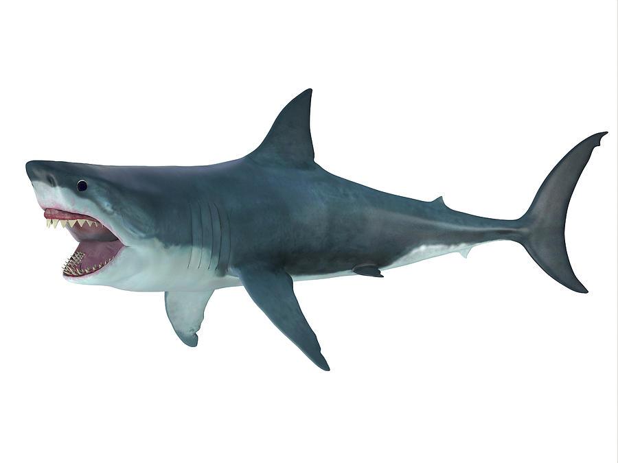 7f4327e34a Megalodon Photograph - Megalodon Shark, Side Profile by Corey Ford