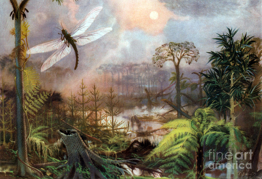 Flora Photograph - Meganeura In Upper Carboniferous by Science Source