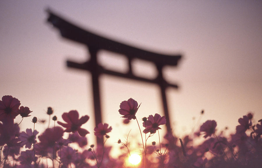 Gunma Photograph - Melancholic Autumn by Koji Tajima