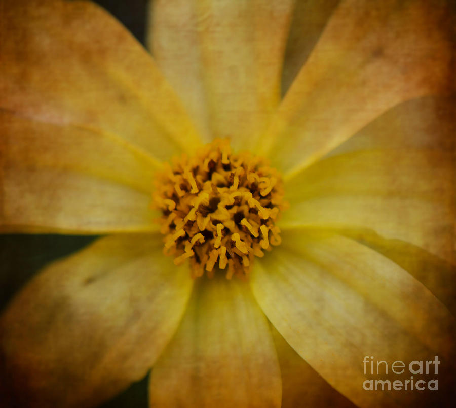 Yellow Photograph - Mellow Yellow  2 by Judy Wolinsky