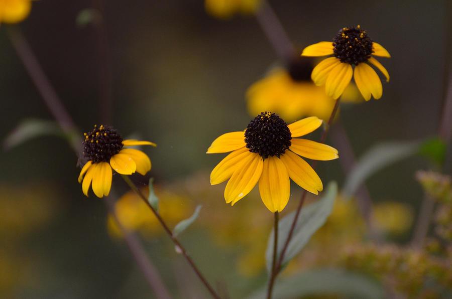 Mellow Yellow Photograph