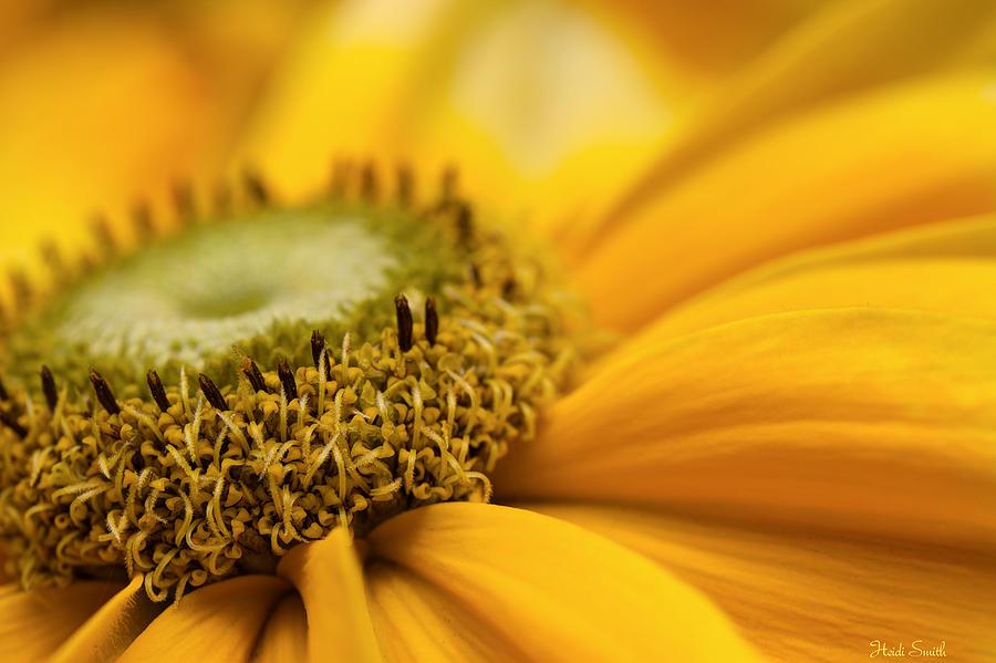 Macro Photograph - Mellow Yellow by Heidi Smith