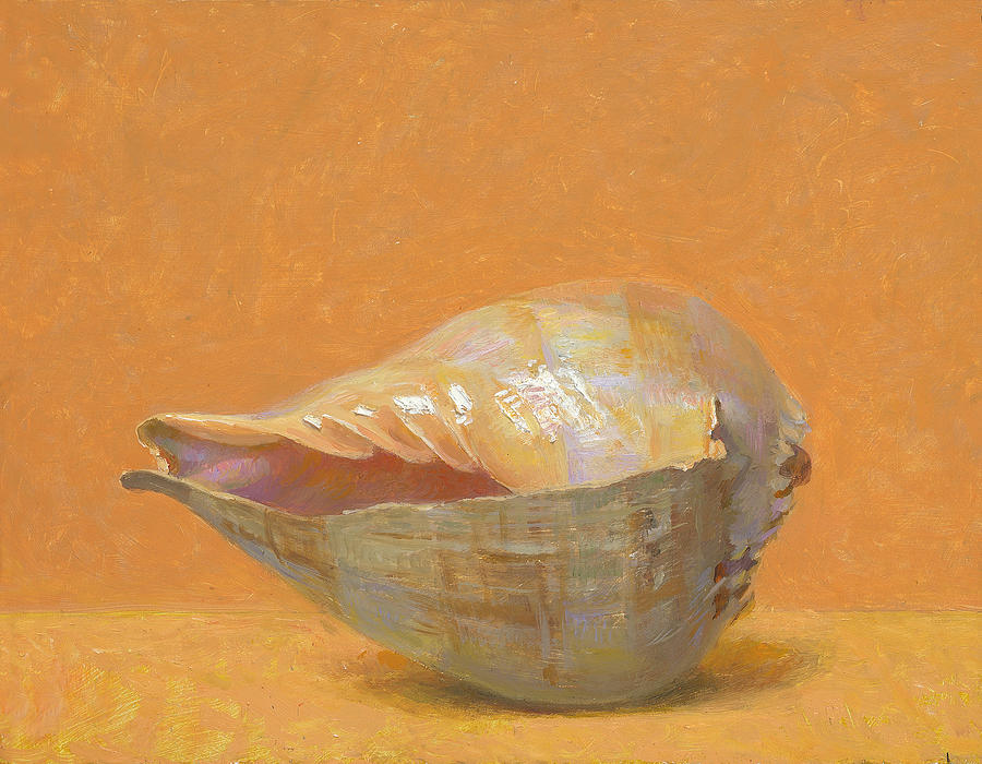 Seashells Painting - Melo Aethiopicus by Ben Rikken