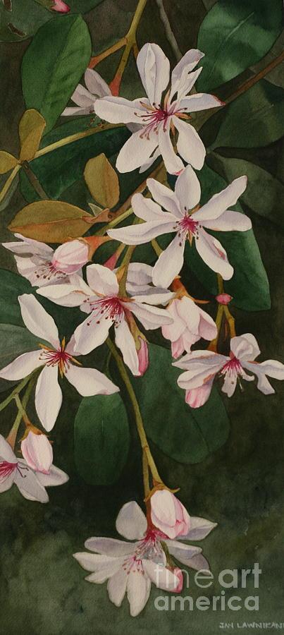 Melody by Jan Lawnikanis
