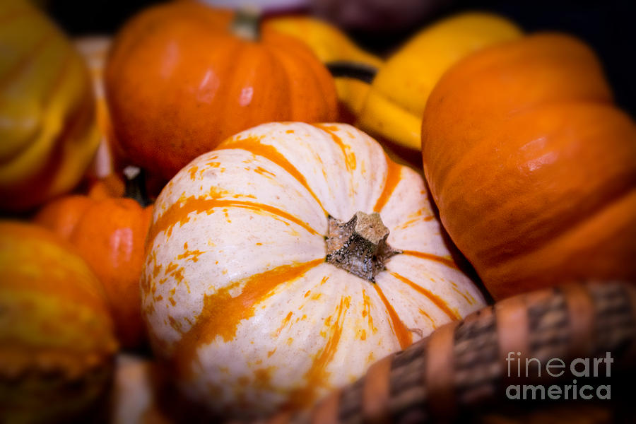 Melons Photograph - Melons by Nelson Watkins
