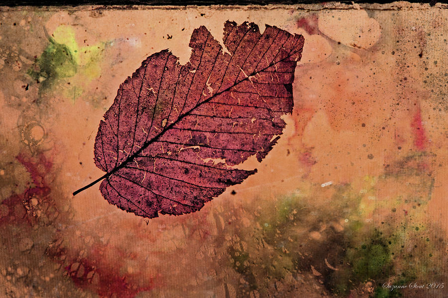 Memoir of a Leaf by Suzanne Stout