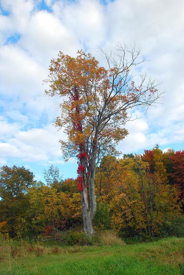 Fall Photograph - Memories by June Lambertson