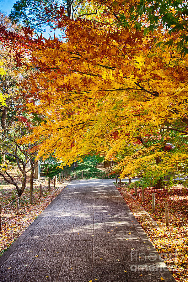Japan Photograph - Memories Of Autumn-2 by Tad Kanazaki