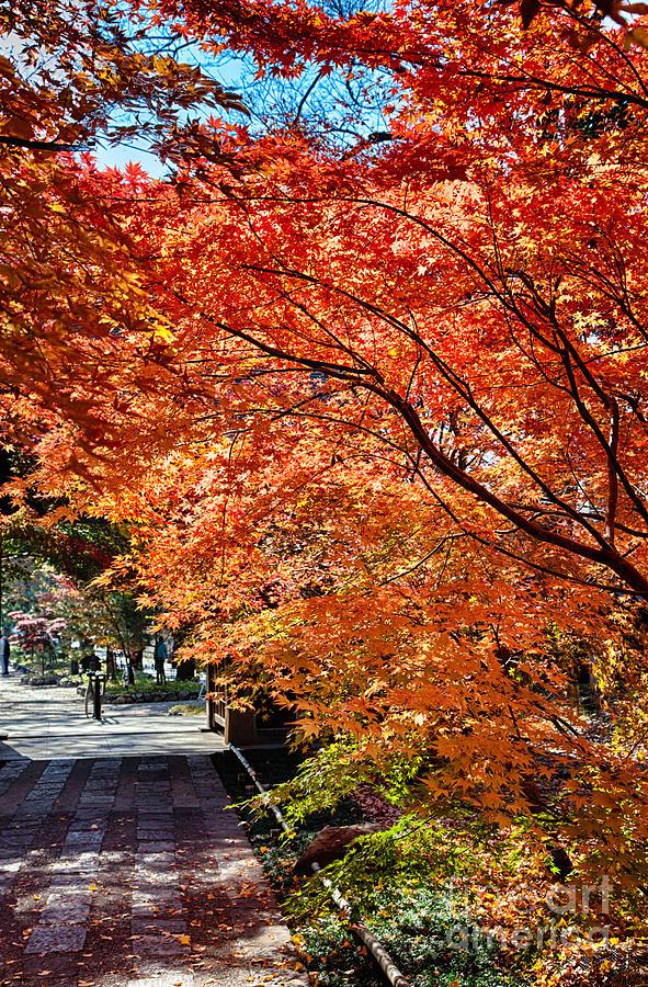 Japan Photograph - Memories Of Autumn-5 by Tad Kanazaki