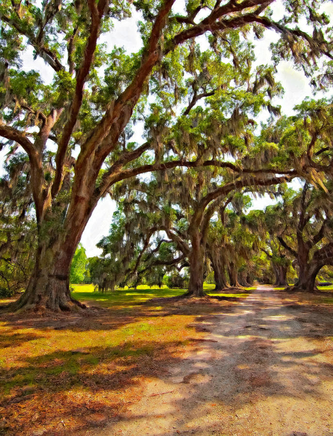 Evergreen Plantation Photograph - Memory Lane Oil by Steve Harrington