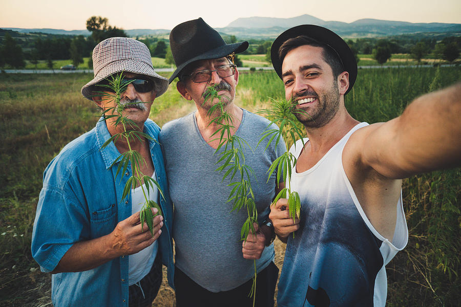 Men enjoying in marijuana field Photograph by Johnce