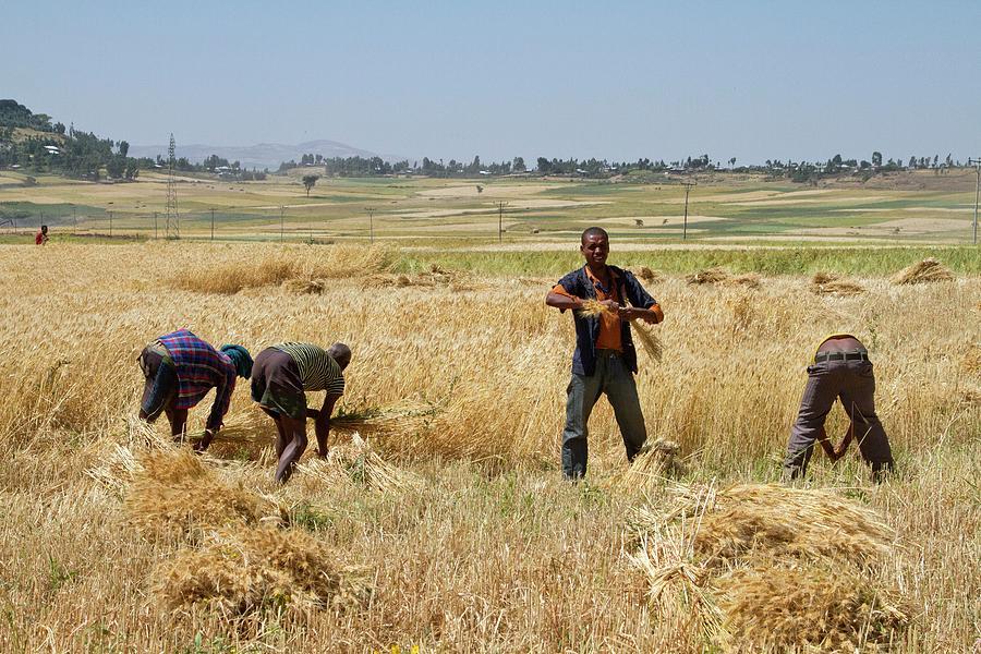 Image result for men harvesting