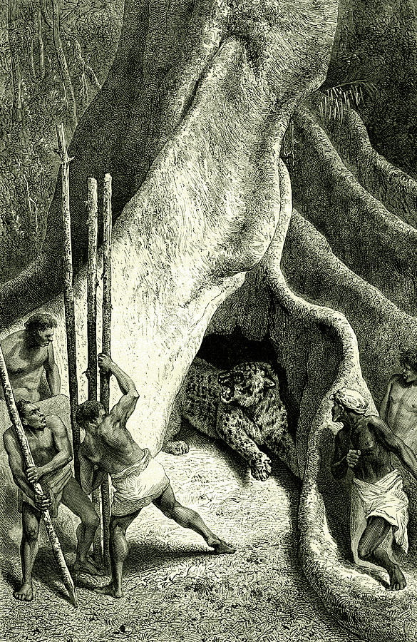 19th Century Photograph - Men Hunting A Jaguar by Collection Abecasis