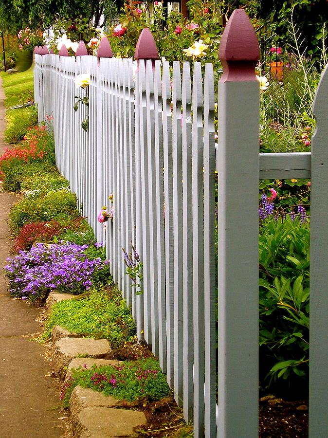 Mending Fences #1 Photograph by Sandy Davis