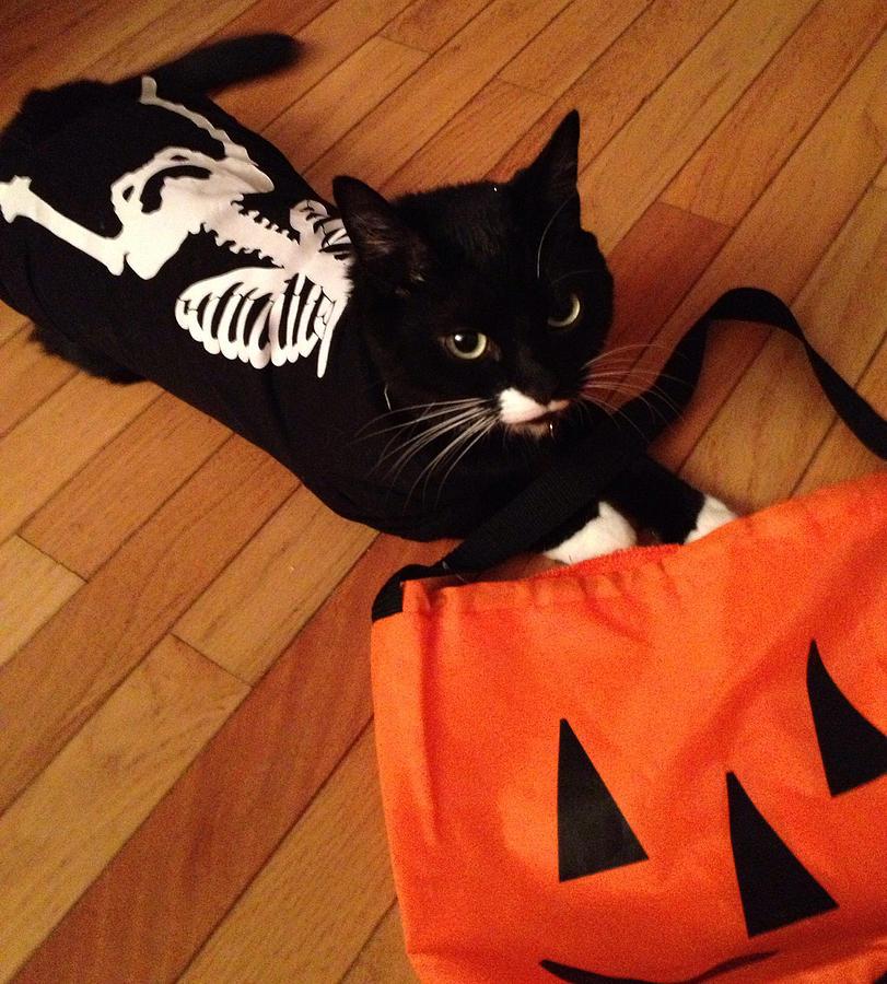 Meow Cat In Skeleton Costume Pyrography by Juhli Jansen