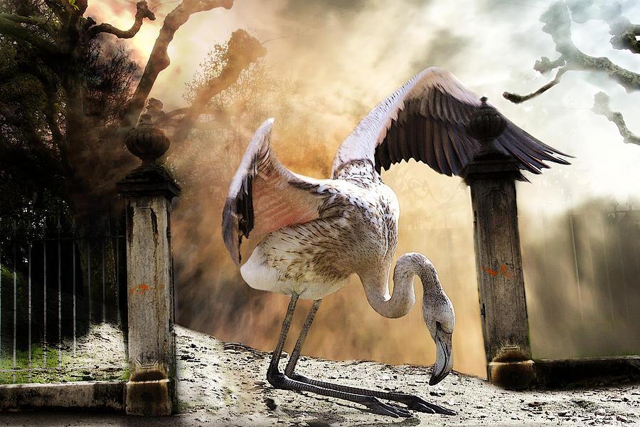 Bird Photograph - Mercy by Christine Sponchia