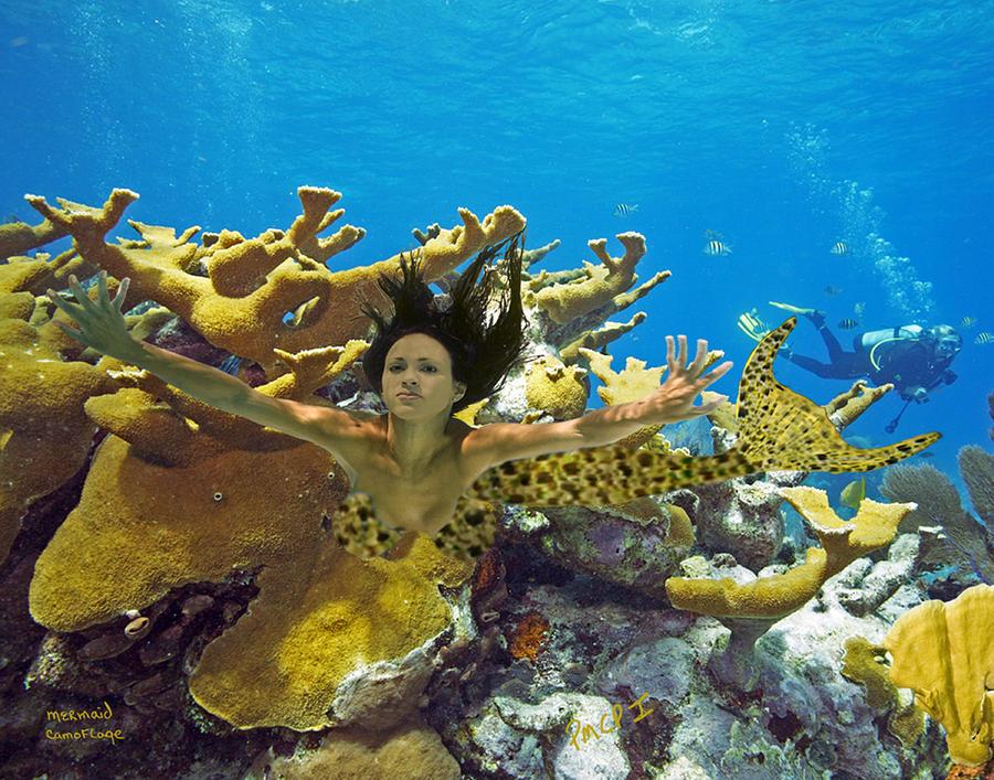 Mermaid Photograph - Mermaid Camoflauge by Paula Porterfield-Izzo