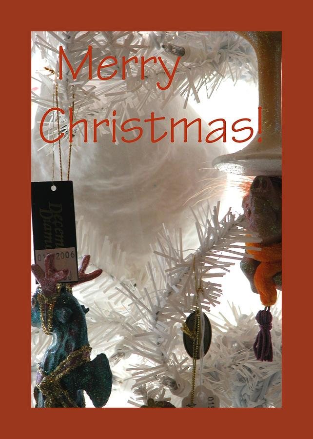Merry Christmas 0182 Photograph