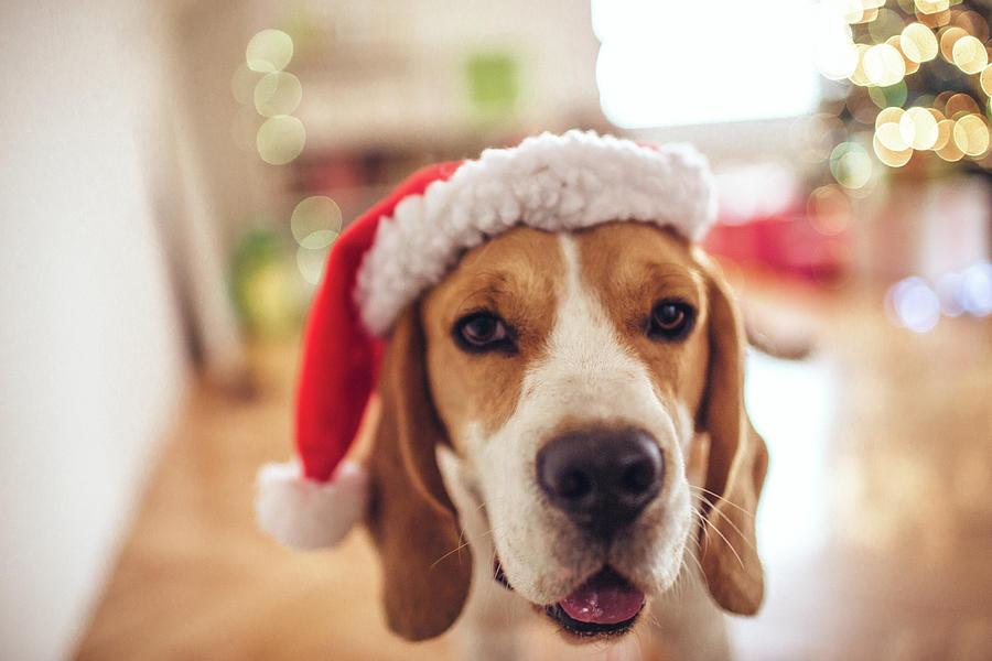 Merry Christmas Photograph by Aleksandarnakic