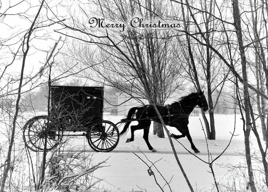 Amish Photograph - Merry Christmas Buggy by David Arment