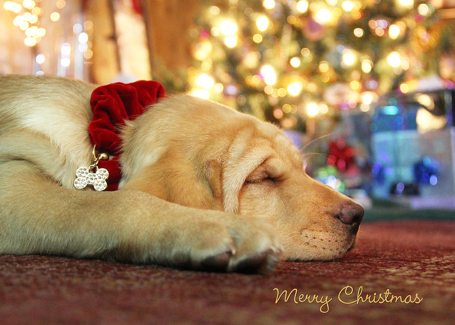 Merry Christmas Photograph - Merry Christmas From Lily by Lori Deiter