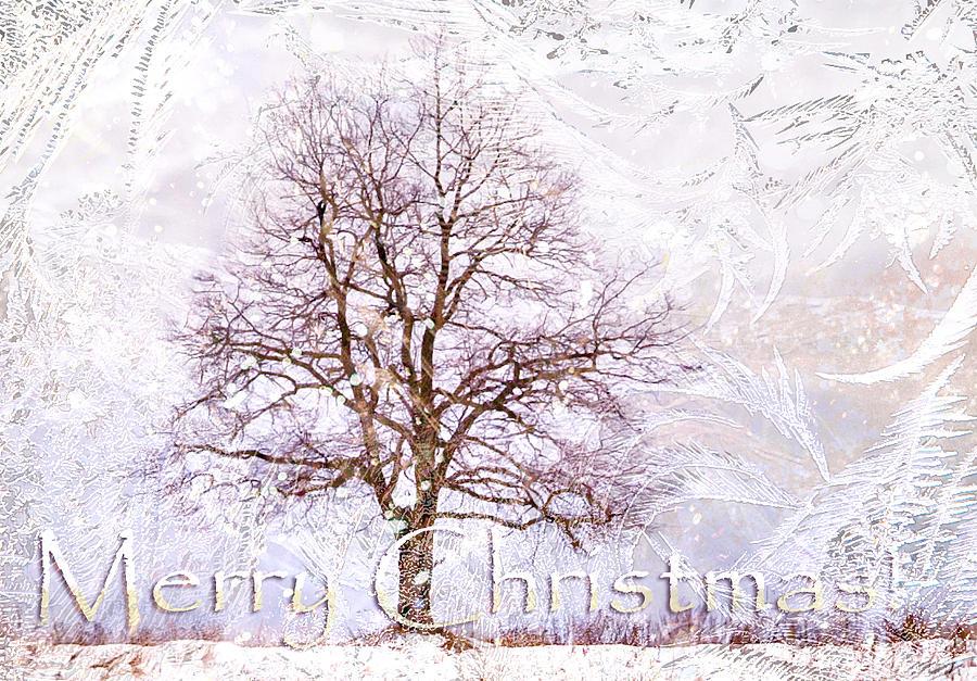 Merry Christmas Photograph - Merry Christmas by Jenny Rainbow