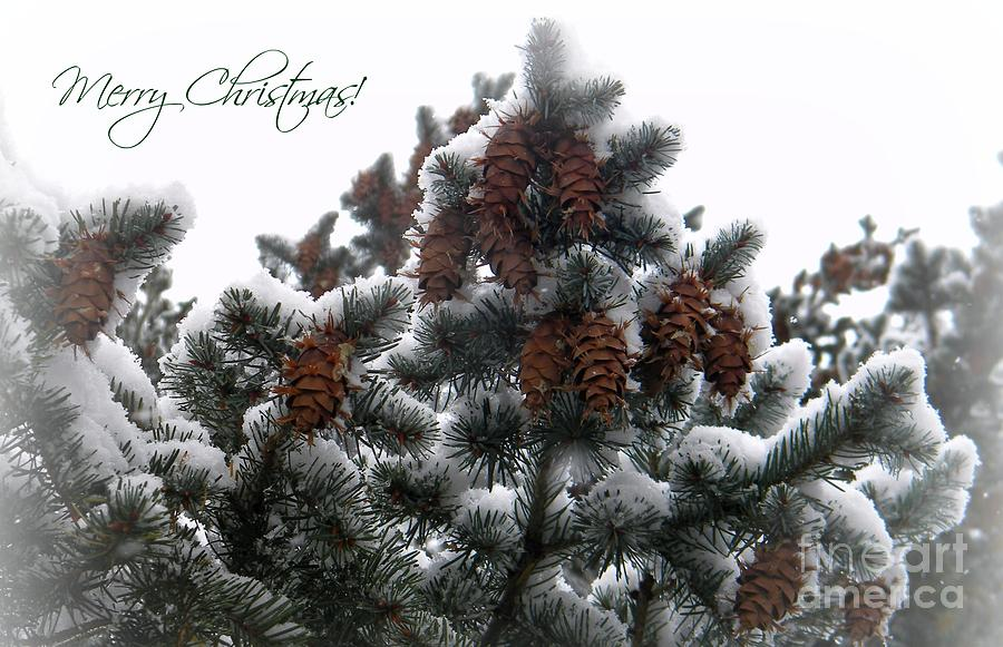 Pine Cone Photograph - Merry Christmas Pinecones by Michelle Frizzell-Thompson
