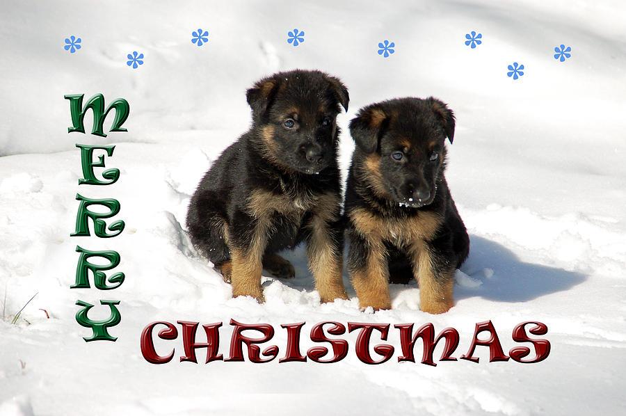 Merry Christmas Puppies.Merry Christmas Puppies