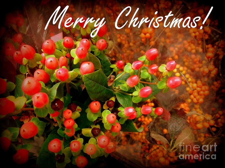 Christmas Photograph - Merry Christmas - Red Berries Holiday And Christmas Card by Miriam Danar