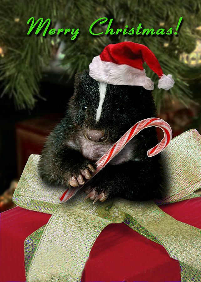 Merry Photograph - Merry Christmas Skunk by Jeanette K