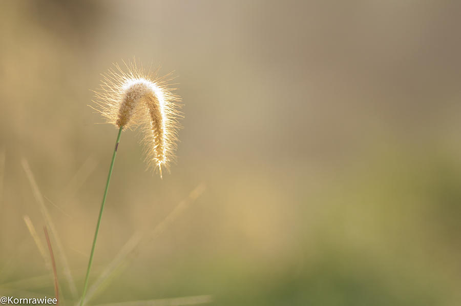 Grass Photograph - Merry Christmas To You And Your Family by Kornrawiee Miu Miu