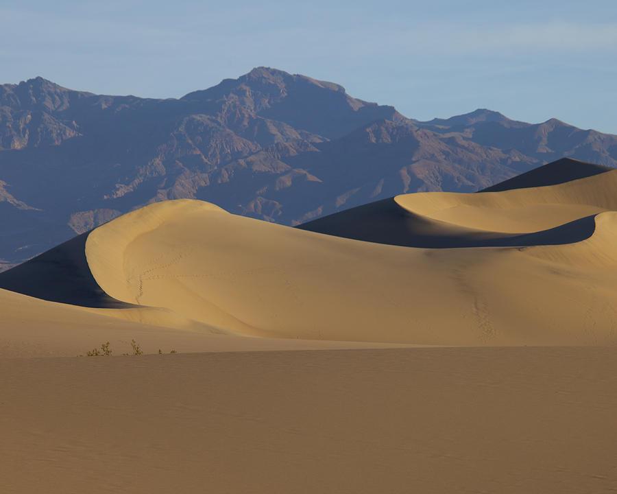 Landscape Photograph - Mesquite Dunes by Neal Martin