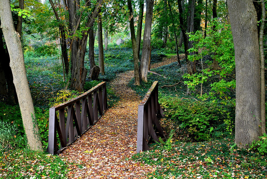 Landscape Photograph - Metroparks Pathway by Frozen in Time Fine Art Photography