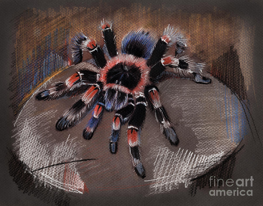 Mexican Redknee Tarantula Drawing By Daliana Pacuraru