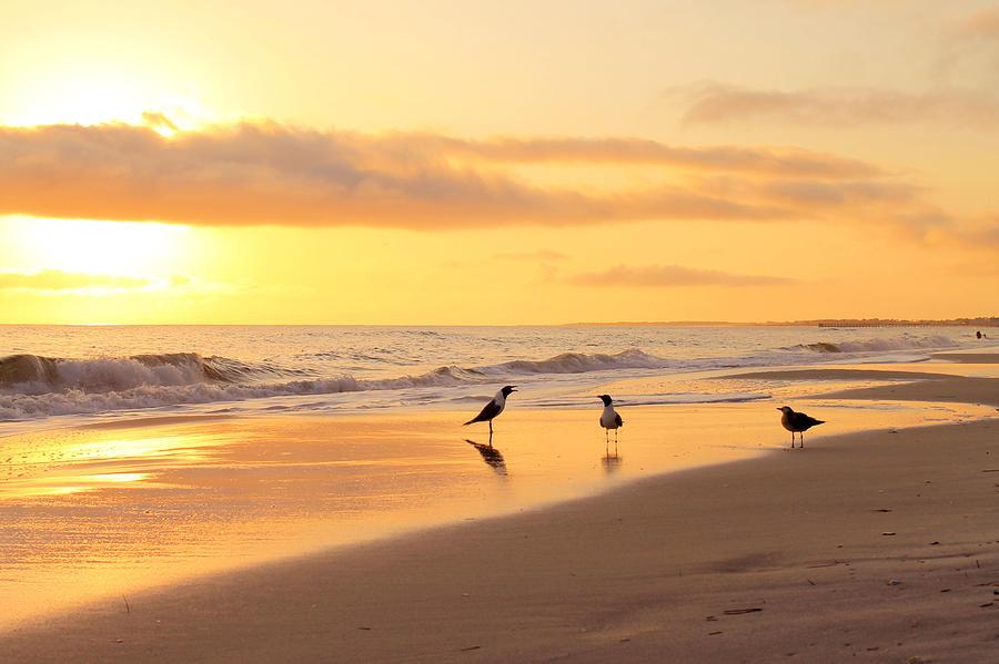 Beach Photograph - Mexico Beach Sand Pipers by Saya Studios