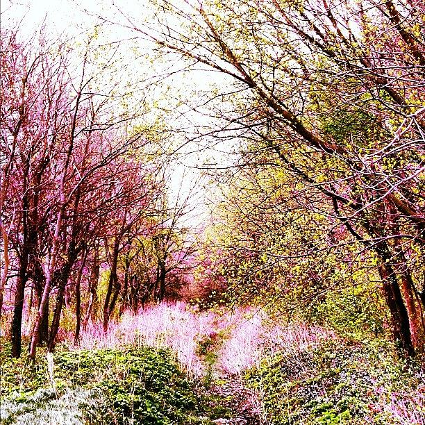 Nature Photograph - #mgmarts #hungary #visionary #forest by Marianna Mills