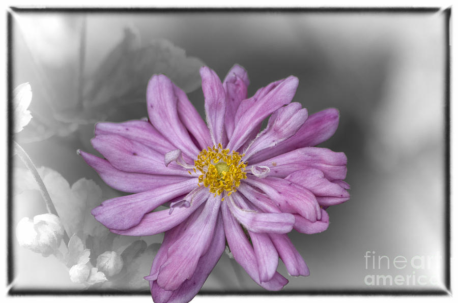 Flowers Photograph - Mi Amore by Joe McCormack Jr