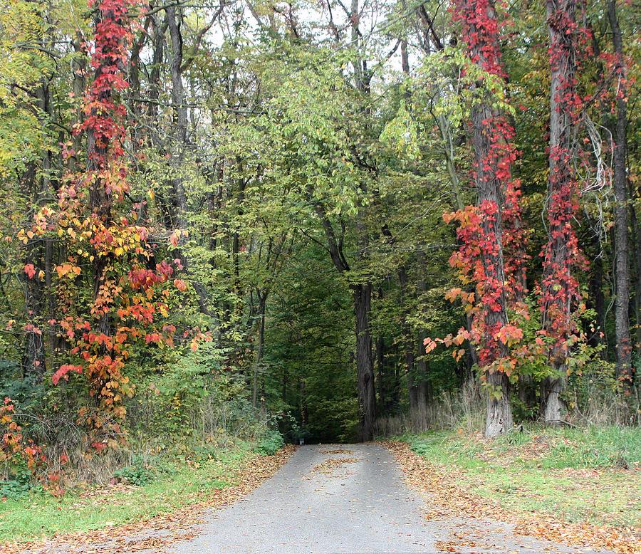 Michigan Photograph - Michigans Gateway to Fall by Ann Marie Chaffin