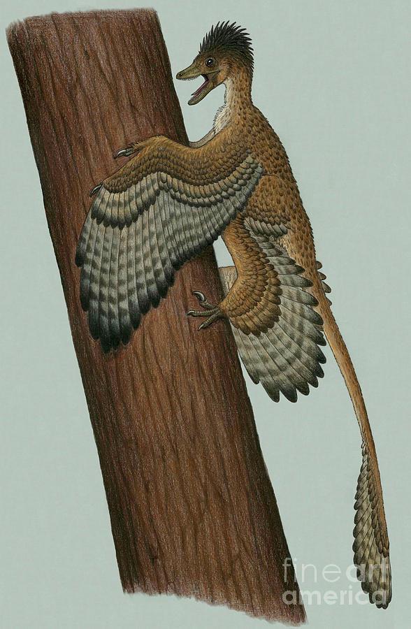 Vertical Digital Art - Microraptor Gui, A Small Theropod by Heraldo Mussolini