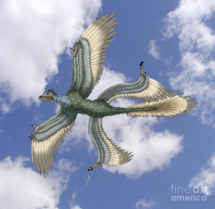 Illustration Photograph - Microraptor by Spencer Sutton