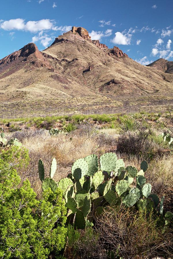 Angiosperm Photograph - Mid-altitude Desert by Bob Gibbons/science Photo Library