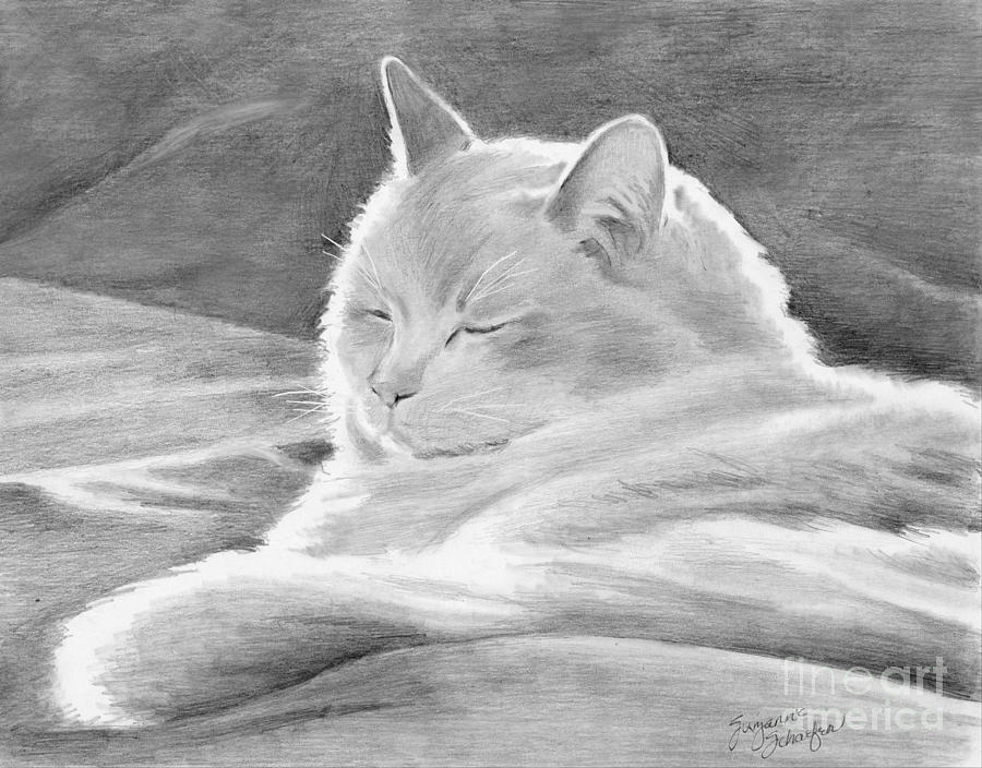 Kittie Drawing - Mid-morning Meditation by Suzanne Schaefer