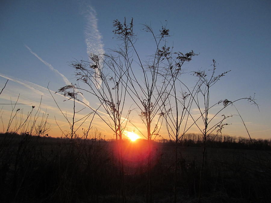 Sun Photograph - Middle Of The Field Sunrise by Tina M Wenger