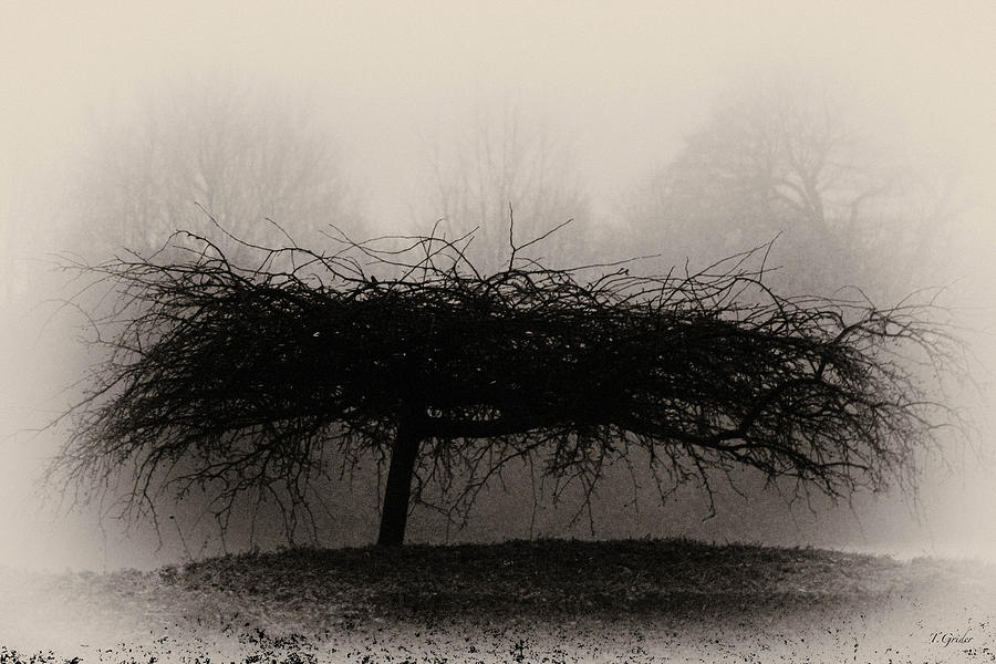 Britain Photograph - Middlethorpe Tree In Fog Sepia - Award Winning Photograph by Tony Grider
