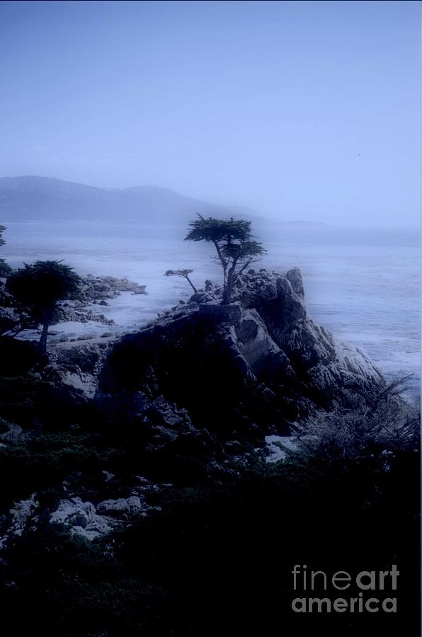 Cypress Photograph - Midnight Cypress by Kathleen Struckle