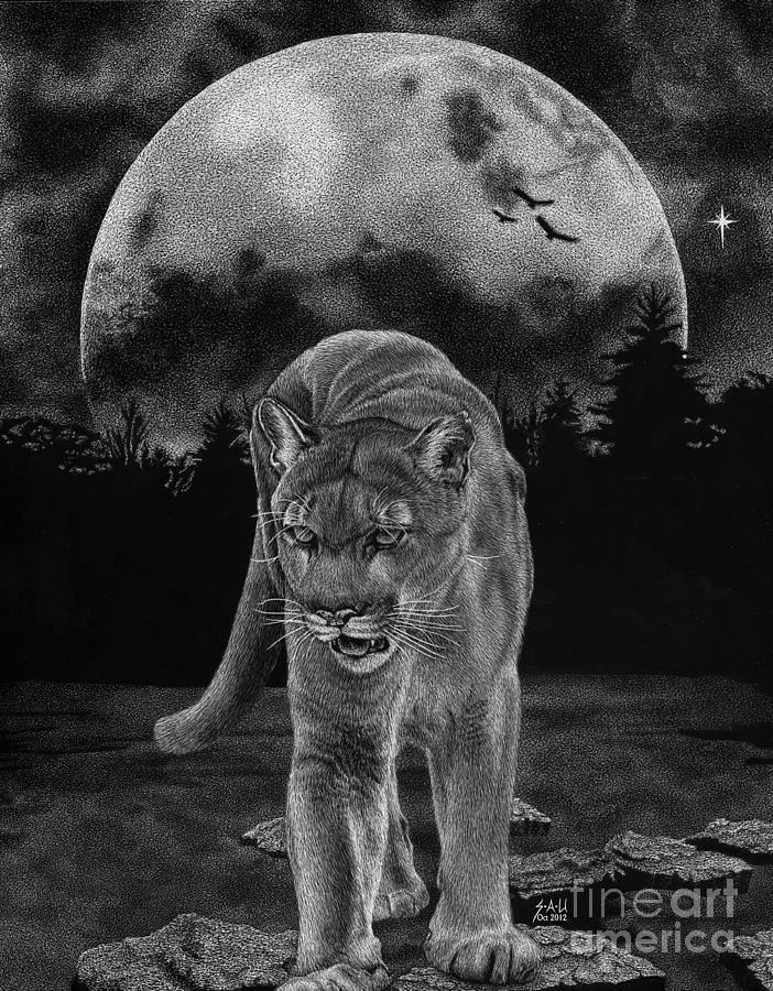 Scratchboard Drawing - Midnight Patrol by Sheryl Unwin