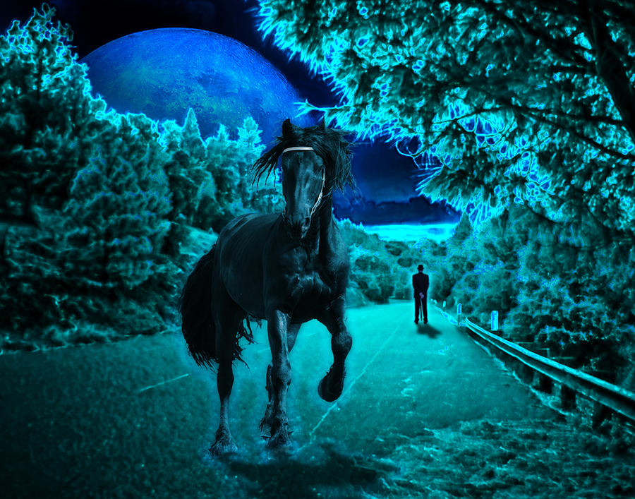 Horse Photograph - Midnight Vision by Jim Painter