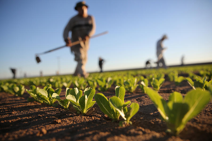 Migrant Workers Farm Crops In Southern Ca Photograph by John Moore