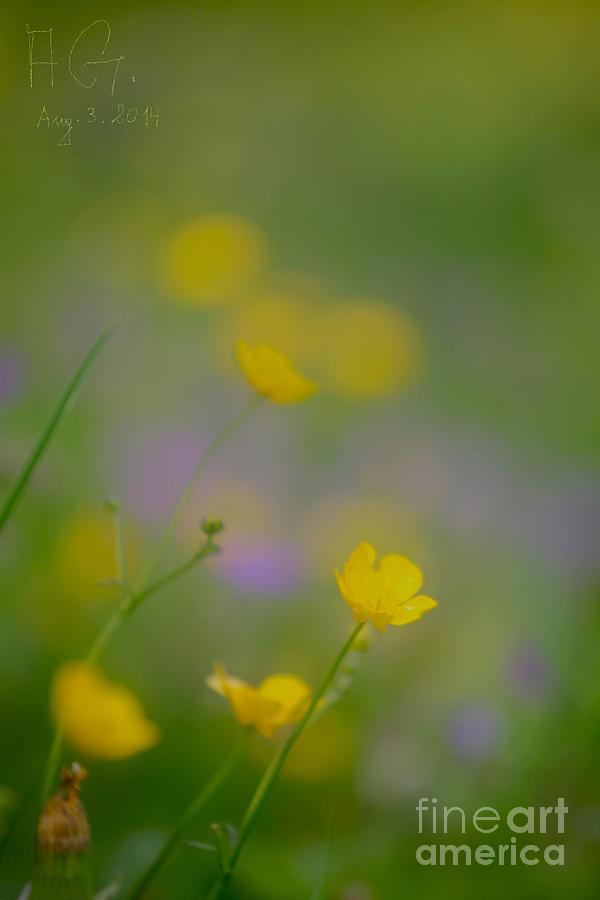 Natura  Photograph - Mil Gracias Abbrazo by  Andrzej Goszcz