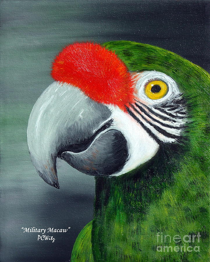 Oil Photograph - Military Macaw by Patrick Witz